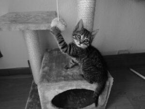 Katze spielt am Kratzbaum