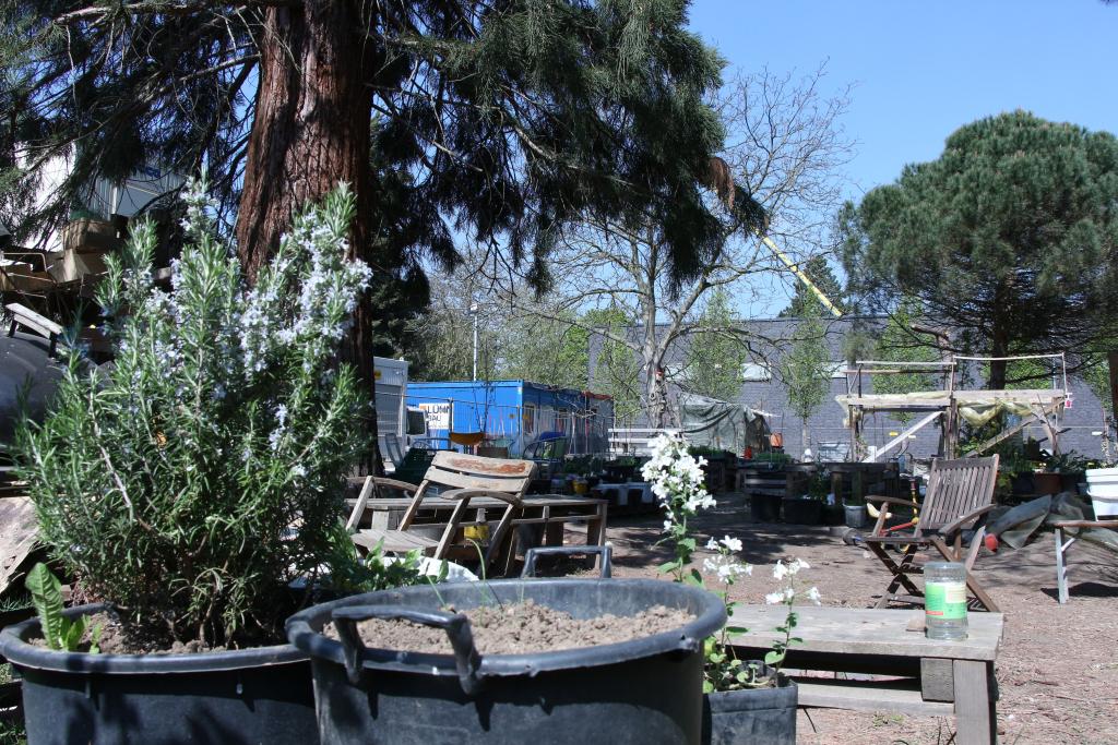 Bild von einem Garten mit Baum