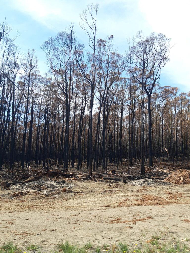 verbrannte Bäume