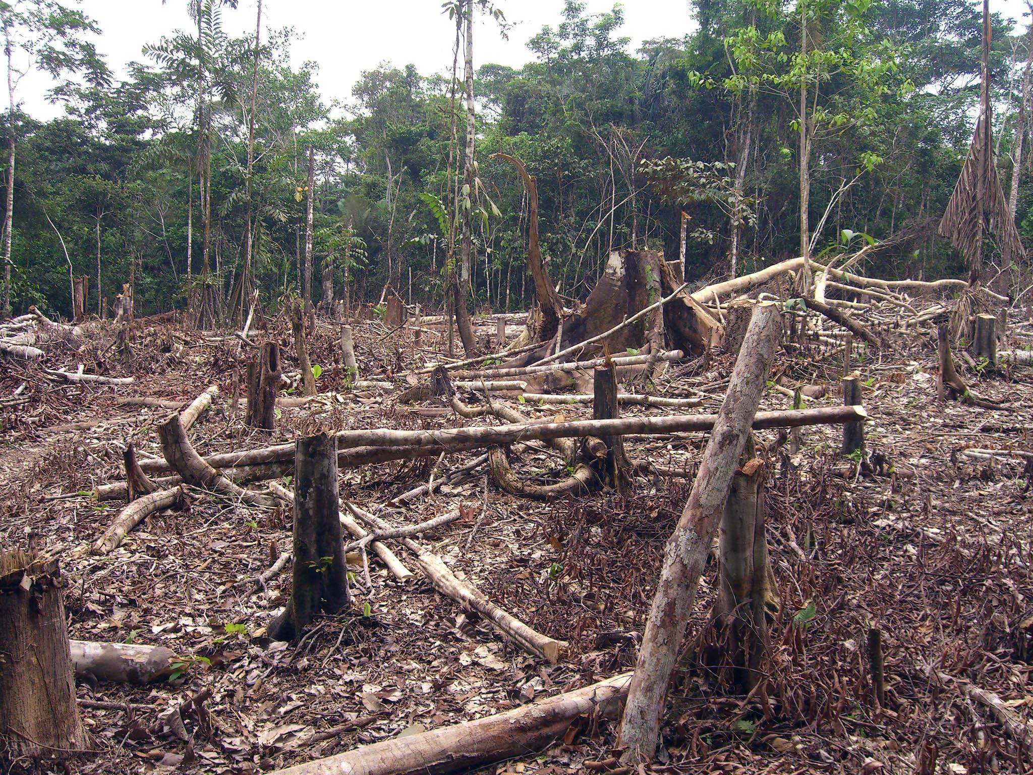 geordete Bäume